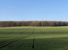 Making the most of a winter's Sunday - cycling 20 January 2019 - lines of winter barley (mikeyashworth) Tags: mikeashworthcollection otley poolinwharfedale stainburn leathley bike cycling mtb kina konabike konaowner january2019 wintersun clearskies cold still calm bracing fields landscape yorkshire ploughlines crops wintercrops