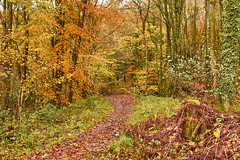 Autumn colours, woodland walk, November 2013 (imagesbyhmck) Tags: countryside environment natural nature outdoors peaceful tranquil tranquility lightroomcc autumncolours november 2013 autumn fall leaves trees woodland woods deciduoustrees deciduouswoodland vegetation unitedkingdom scotland dumfriesandgalloway annandalesouth uk flickr bridlepath bridleway lane path pathway track landscape scenery scenic view bracken gate 5barredgate fivebarredgate woodengate annanarea