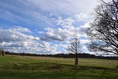 Richmond Park, England on a cloudy day (Heather Smithers) Tags: richmondpark englandonacloudyday richmond park england clouds cloudy sky