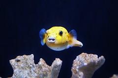 Fisch (Hugo von Schreck) Tags: hugovonschreck fish fisch canoneos5dsr tamronsp35mmf18divcusdf012