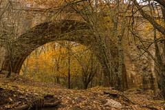 Otoño. (Amparo Hervella) Tags: hayedodemontejo españa comunidaddemadrid spain paisaje otoño hojas árbol natutaleza puente colores d7000 nikon nikond7000