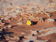 P1107506-LR (carlo) Tags: namibia panasonic dmcg9 g9 africa desert deserto landscape africanlandscape sossusvlei