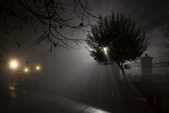 Escaping the fog (nzamp) Tags: fog nikon d3100 weather light nikond3100 ioannina greece black white