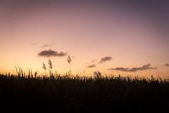 Sunset 3 (Pierre de Champs) Tags: d750 nikonphotography antilles photographer martinique caribbeanlover caribbean madinina tropical sunset sunsetlover sky clouds nikon