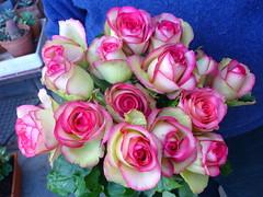 roses Glow (pietro68bleu) Tags: bouquet horticulture fleurs rose flower beautiful france colmar color petal white pinnk blanc