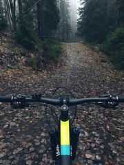 Misty Autumn Morning Ride (pjen) Tags: boreal maastopyörä pike 275 650b kashima trail bicycle bike 2x11 outdoor vehicle 5010 5010cc 50to01 autumn fall santacruz mtb finland nature forest carbon hiilikuitu maastopyöräily fullsuspension mist