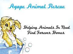 agapeanimalcenter (agapefarm) Tags: cats second life sl charity shop store roleplay animals pets acacia falls sim morph game