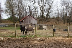 Rachel Carson Conservation, MD 27 (mixedeyes) Tags: autumn horse maryland