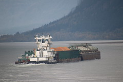 Barge on the Columbia River (east of Portland, Oregon) - November 1st, 2018 (cseeman) Tags: columbiarivergorge columbiariver columbiarivergorgenationalscenicarea portland2018 pacificnorthwest oregon water overcast wet autumn columbiariverhighway trails bridges barges tugs shipping boats