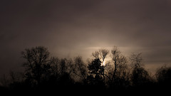 Vor den Toren der Stadt . . . (norbert.r) Tags: nature tree dark spooky sky outdoors sunset landscape silhouette forest cloudsky nopeople backlit baum beautyinnature flickrchallengegroup gegenlicht landschaft