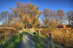 39-Britzer Garten_181116_N- 18 (sigkan) Tags: deutschland berlin britzergarten hdr nikond700 nikon2485mmf284