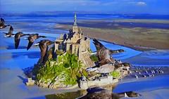 FRANCE - Mont Saint-Michel (Jacques Rollet (Little Available)) Tags: extérieur sea mer oiseau paysage landscape aérien vol flight france