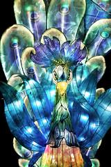 Peacock With Attitude (Seeing Visions) Tags: 2018 unitedstates us losangelescounty la arcadia laarboretum moonlightforest chineselanternfestival night dark colorful cloth light peacock bird texture raymondfujioka