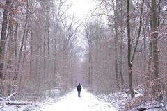 P1060972 (mireiatarres) Tags: nieve snow forest tree winter invierno blanco camino path