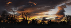 Sunrise Aria (courtney_meier) Tags: colorado landscape winter clouds cold dawn magichour morning morninglight panorama silhouette sunrise trees