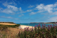 Camel Estuary (Mike.Dales) Tags: camelestuary rivercamel padstow cornwall polzeath flowers flora sand dunes atlantic england
