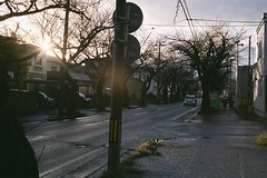 A morning after the rain (しまむー) Tags: minolta himatic rokkor 45mm f2 fuji superia venus 400