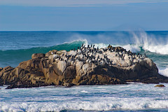 Pacific Grove, CA Coastal Escape for Birds, Christmas 2018 (Northwest Lovers) Tags: california highway1 pacificgrove