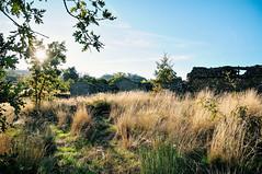 ancient fields in Penela da Beira (Gail at Large | Image Legacy) Tags: 2018 peneladabeira portugal viseu gailatlargecom