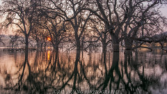 Trees In the Water (Jaykhuang) Tags: bayarea eastbay california trees water reflections sunrise jayhuangphotography