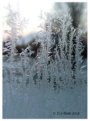 Ice Crystals (Picsnapper1212) Tags: ice crystals icecrystals winter cold scene window pane glass
