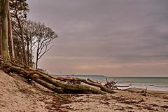 Weststrand (Wunderlich, Olga) Tags: ostsee weststrand bäume wald sand meer landschaftsbild naturaufnahme mecklenburgvorpommern
