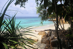 Discover the secluded Pollo beach on Koh Lipe (B℮n) Tags: kolipe kohlipe เกาะหลีเป๊ะ kohlippy adangrawi archipelago ploysiam national park kohturatao koturatao kohlipeh nationalparkkohtarutao tarutao bounty island thailand andamansea sandy beach snorkling coral reef tropical fish nemo protectedarea palmtree coconuts crystal clear water seawater siam nature reserve province blue cyan thai sunrise bulowbeach deserted girl woman relax paradise swimming solitude jungle green lush forest path trail hiking pollobeach hornbills 100faves topf100