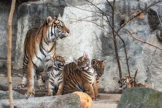 Die komplette Rasselbande aus den Tierpark