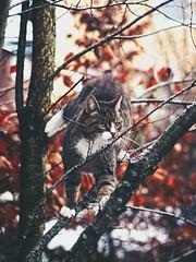 Cat Bokeh - 19. Januar 2015 (torstenbehrens) Tags: kater garten baum olympus ep5 m45mm f18 cat bokeh 19 januar 2015