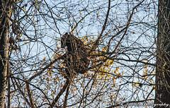 BearBird (R. Sawdon Photography) Tags: bear branches trees forest bearbird perch