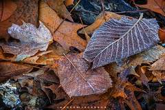 Rockway Ontario 2018 (John Hoadley) Tags: rockway ontario 2018 canon 7dmarkii 24105 f18 iso100 november colors autumn frost leaves