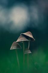 A crowded spot.. (Bomonsted) Tags: bokeh bokehlicious mushroom toadstool jupiter37a 135mm m42 sonya6300