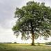 L'arbre & l'enfant