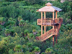 Tower (knightbefore_99) Tags: mexico mexican mujeres island isla tropical cool awesome quintanaroo great tower bird jungle tour torre trees wonderful