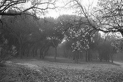L1004871 (Sonsoles Huidobro) Tags: leicam10 elmarit24 fog nieblas landscape