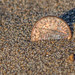Sand Penny