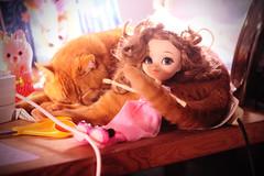 hammy😺 and nanette👱♀️ (sugarelf) Tags: mycat hammy pullip doll nanette naturallycurlyhair familycat