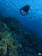 IMG_4247 (cdgobio) Tags: marrojo redsea 2018 dunraven