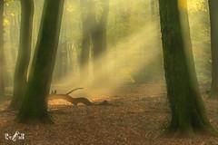 Sunlight in the forest (Renate van den Boom) Tags: 11november 2018 bos europa gelderland herfst jaar landschap maand meervoudigebelichting natuur nederland renatevandenboom seizoenen speulderbos stijltechniek zon zonsopkomst