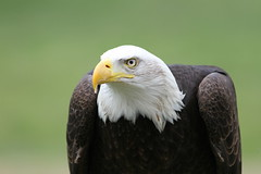 IMG_1459 (Stefan Kusinski) Tags: hemsley duncombe ncbp birdofprey