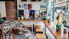 shop kitty  #165206375 (lynnb's snaps) Tags: motog3 newtown cats cellphones city colour digital street 2018 kitty shop window cute sydney australia cat pussy pussycat striped reflections