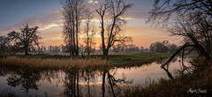 Sunset (Magda Banach) Tags: canon canoneos5dmarkiv rogalinlandscapepark autumn blue clouds colors flora fog greaterpoland green landscape nature outdoor outside plants poland reflection silhouette sky sunset treeline trees water