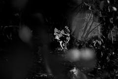 (Stationarytrains) Tags: bw blackandwhite angel angelwings statue light sunlight lighting contrast dof depthoffield focus shadows