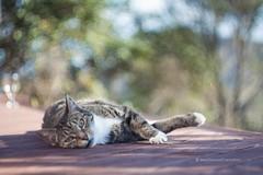 Pupu on the deck (hueymilunz) Tags: helios pet portrait pupu cat colour life light summer wellington nz newzealandtransition newzealand