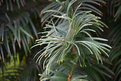 "last session with my favorite objective (fungus) (Gerhard Leppich) Tags: canon eos 40d gaddyline autumn fall herbst ""botanical garden"" bonn"