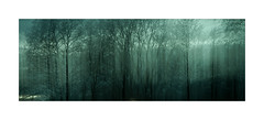 AD I (*TimeBeacon*) Tags: icm monochromatic trees wood forest branches twigs ghostwood tb mood atmosphere ambiance abstract abstraction dreamscape