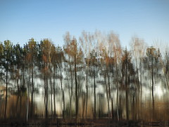 pines and birches (vertblu) Tags: pinetrees birchtrees pines birches winter wintersun reflection reflections reflectedtrees reflectedskies distorted distortion moody mood ambiance pond pondsurface pondscene water watersurface ripples rippling vertblu mirroring mirrored