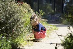 cheeky :) (louisa_catlover) Tags: portrait family child toddler daughter tabitha tabby garden nature outdoor karwarra karwarraaustraliannativebotanicgarden kalorama dandenongs melbourne victoria australia spring november afternoon