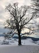 Winter 2019: Bulestel bei Adlisberg Arni - Biglen (Martinus VI) Tags: winter winterlandschaft hivers schnee snow nieve neige emmental kanton canton de bern berne berna berner bernese schweiz suisse suiza switzerland svizzera swiss y190112 martinus6 martinus6xy martinus martinusvi