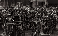 the Dutch reality (glasseyes view) Tags: glasseyesview bicycle ride dutch netherlands alot blackandwhite